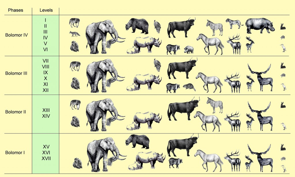 Representación faunística de la Cova del Bolomor segun las fases paleoclimáticas establecidas