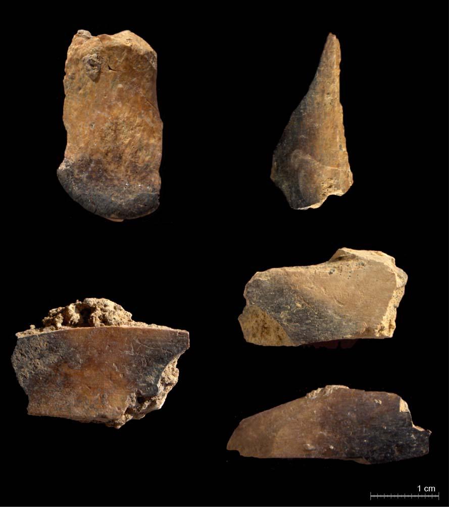 Cremació, diferenciació d'algunes restes òssies del nivell IV (Blasco i Fernández Peris, in press)