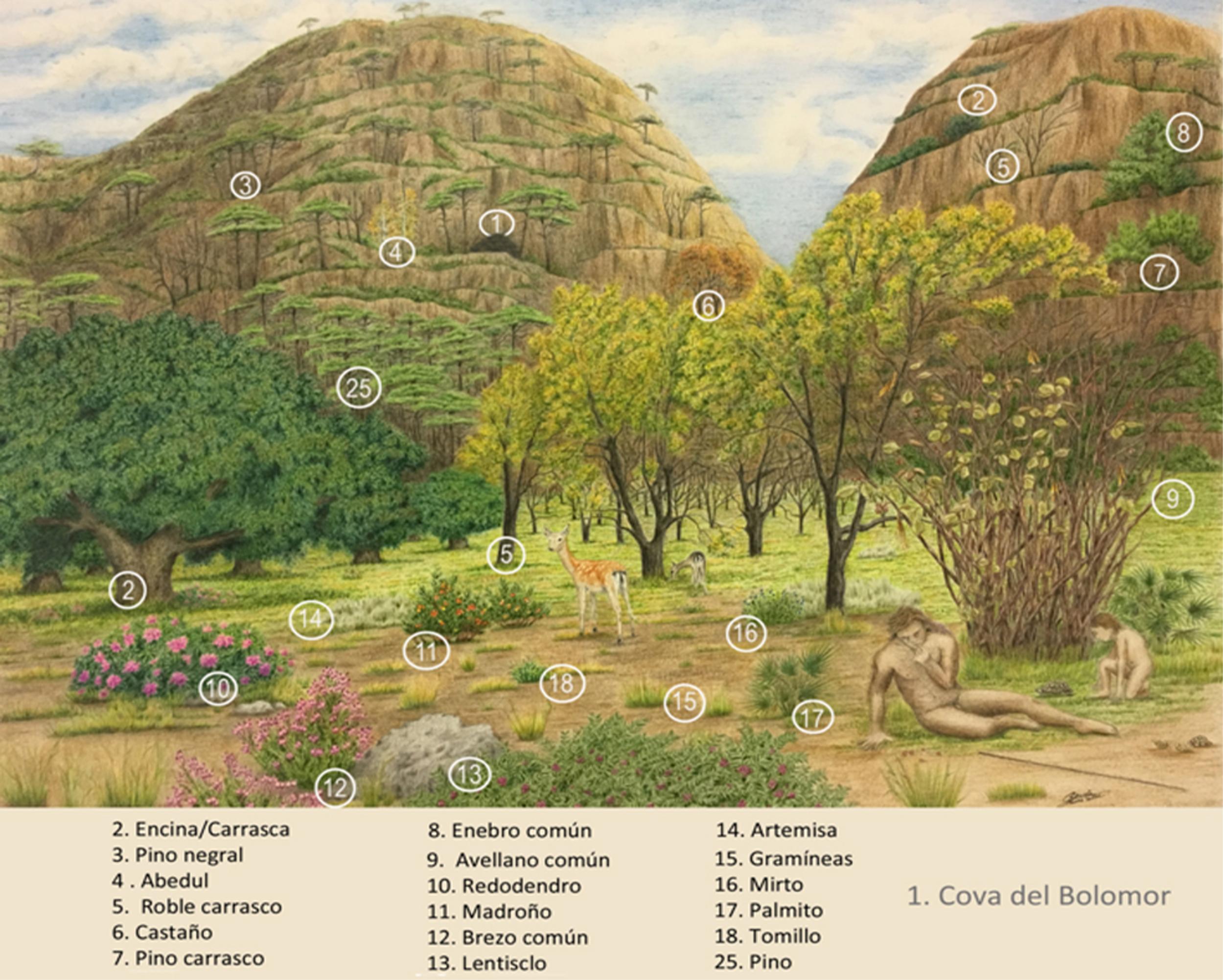 Reconstrucción paleoambiental de La Valldigna